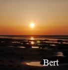 Medium Bert