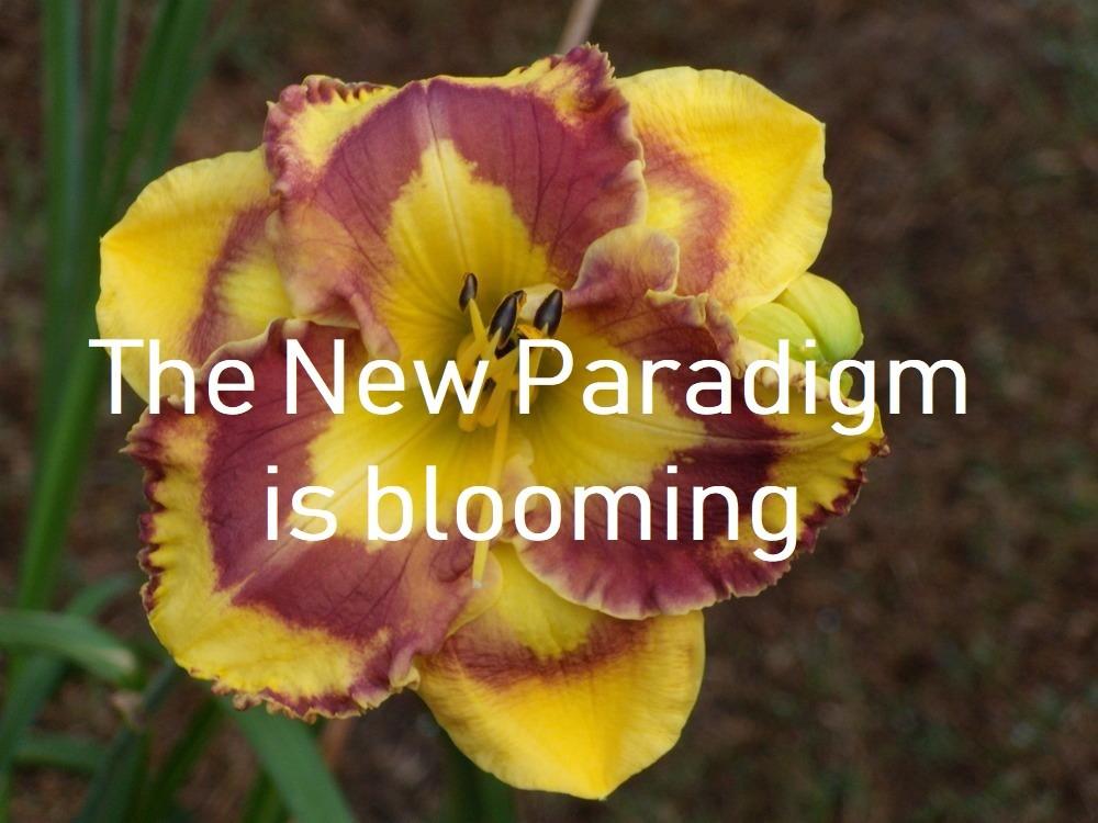 Leven vanuit het nieuwe paradigma
